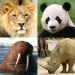 Download Animals Quiz – Learn All Mammals, Birds and more! v3.0.0 APK